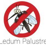 Come Allontanare le zanzare con Ledum Palustre