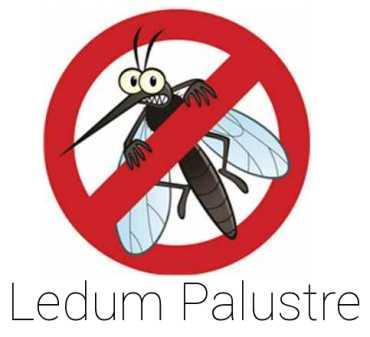 Difendersi dalle zanzare con il Ledum Palustre